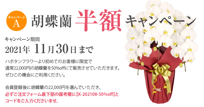 胡蝶蘭キャンペーン