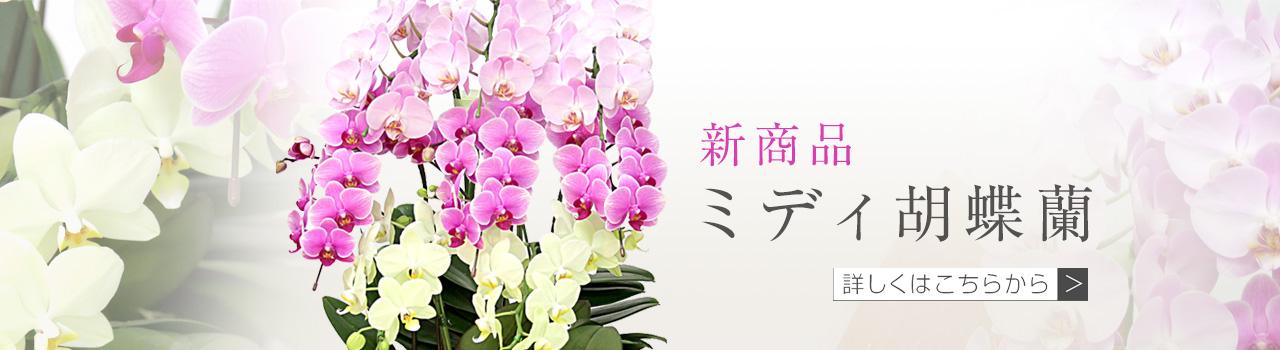 ミディ胡蝶蘭なら、法人専門贈り花 ハボタンフラワー | 開店祝い、就任祝い、移転祝いなど多くのお祝いにピッタリの贈り花を大切な気持ちと共にお届け致します。胡蝶蘭やスタンド花、アレンジメントフラワーなどのお祝い用のお花から、お供え用の胡蝶蘭などの供花を取り扱っています。