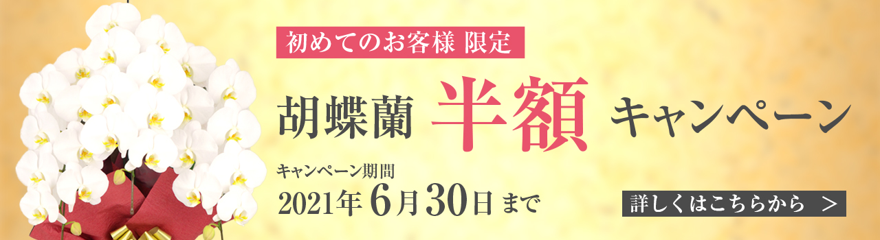 胡蝶蘭キャンペーン   法人専門贈り花 ハボタンフラワー