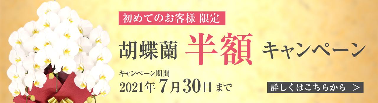 胡蝶蘭キャンペーン | 法人専門贈り花 ハボタンフラワー