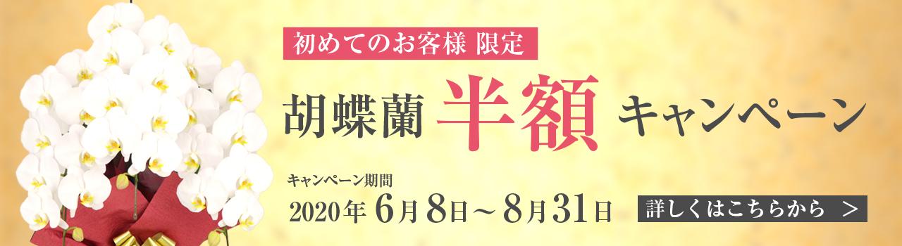初めてのお客様限定!胡蝶蘭半額キャンペーン! | 法人専門贈り花 ハボタンフラワー
