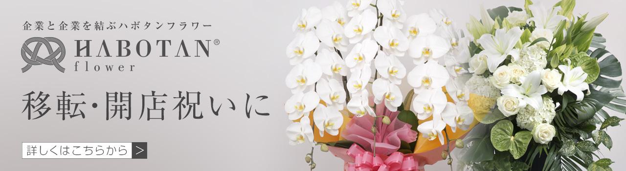 改築・移転祝い   法人専門贈り花 ハボタンフラワー