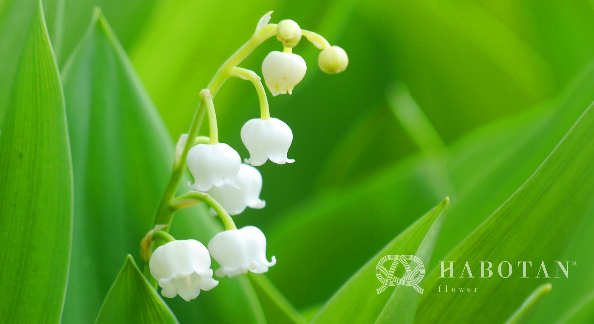 お花の壁紙プレゼント 法人向け花の配達 ギフト Habotan Flower